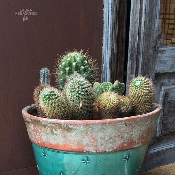 cactus foulard fashon